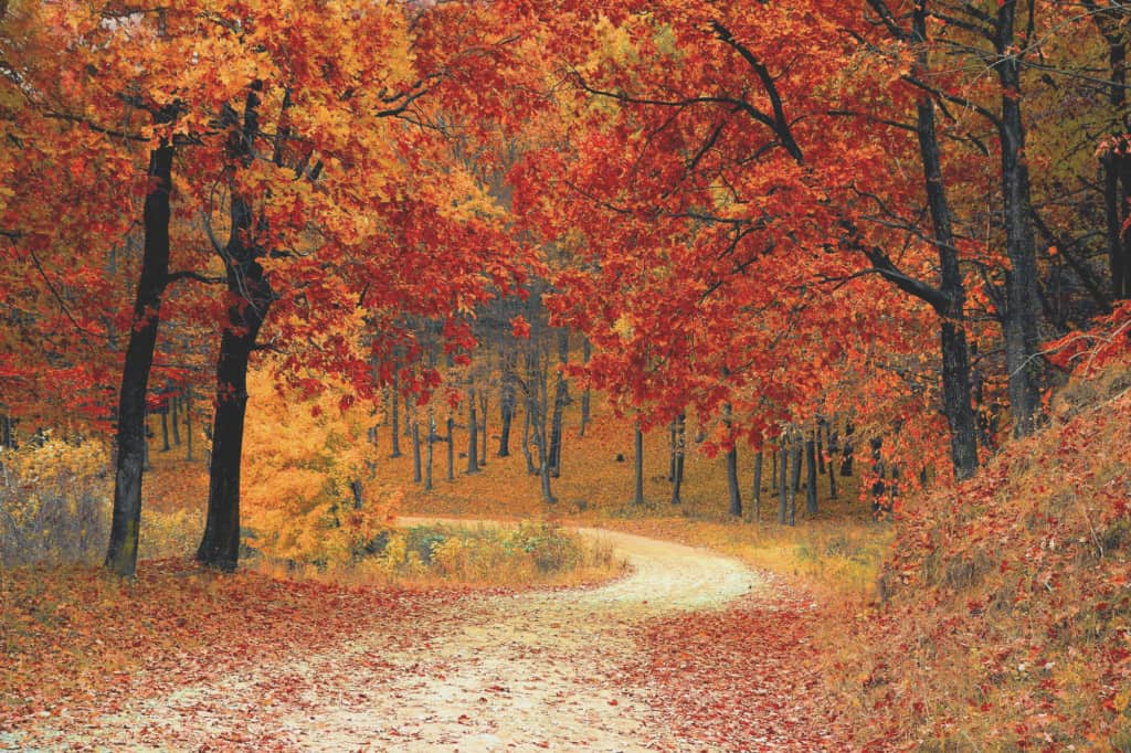 colorful autumn leaves on hiking path
